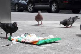 """""""Oh des pigeons !!"""" le coeur du chien s'emnballe et Clic ! La photo est prise."""